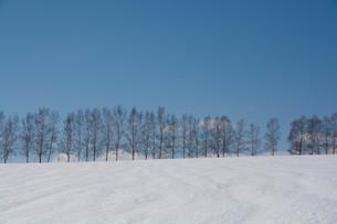 融雪剤が撒かれた雪の畑と青空 美瑛町の写真素材 [FYI01230062]