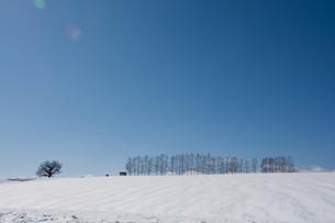 融雪剤が撒かれた雪の畑と青空 美瑛町の写真素材 [FYI01230063]