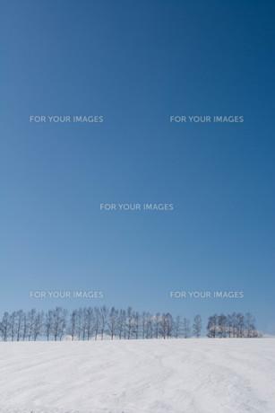 融雪剤が撒かれた雪の畑と青空 美瑛町の写真素材 [FYI01230064]