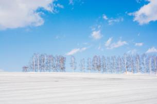 融雪剤が撒かれた雪の畑と青空 美瑛町の写真素材 [FYI01230065]