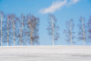 融雪剤が撒かれた雪の畑と青空 美瑛町の写真素材 [FYI01230066]