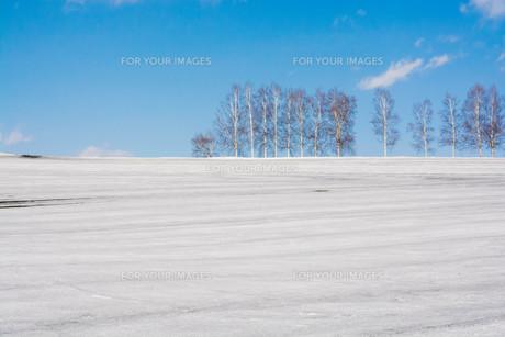 融雪剤が撒かれた雪の畑と青空 美瑛町の写真素材 [FYI01230067]