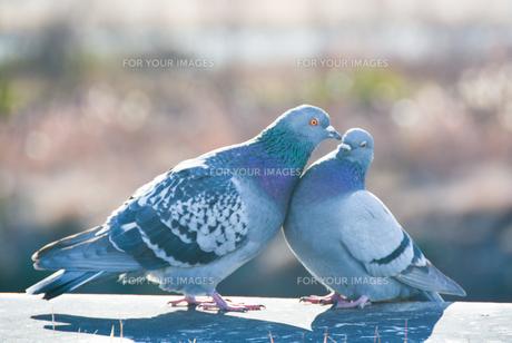 平和の写真素材 [FYI01230077]