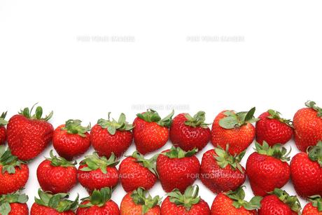 イチゴの写真素材 [FYI01230377]