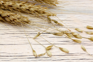 麦の写真素材 [FYI01230428]