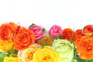 薔薇の花束の写真素材 [FYI01230443]