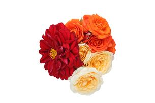 ダリアと薔薇の花束の写真素材 [FYI01230448]