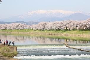 一目千本桜の写真素材 [FYI01230550]