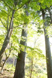新緑の樹木の写真素材 [FYI01230556]