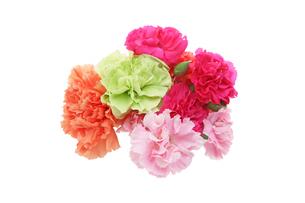 カーネーションの花束の写真素材 [FYI01230632]