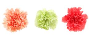 カーネーションの花束の写真素材 [FYI01230633]