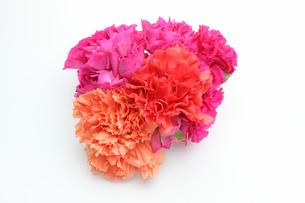 カーネーションの花束の写真素材 [FYI01230635]
