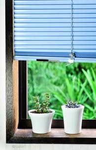 窓辺に置いた2種類の多肉植物の写真素材 [FYI01230875]
