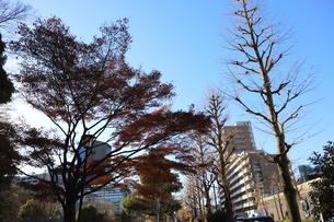 東京ドームに隣接する「小石川後楽園」という日本庭園の写真素材 [FYI01230960]