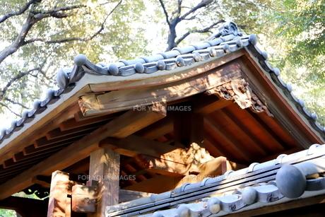 東京ドームに隣接する小石川後楽園という日本庭園の写真素材 [FYI01230987]