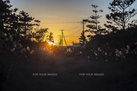 風景 背景 冬 夕日 オレンジ 茜色 空 シルエット 日没の写真素材 [FYI01231038]