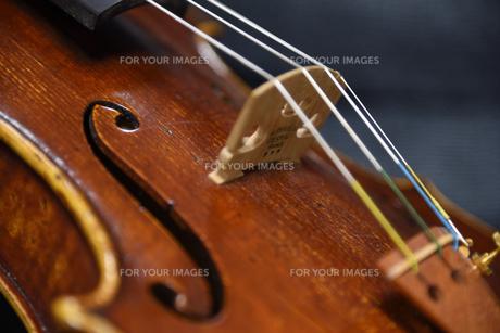 バイオリンの写真素材 [FYI01231178]