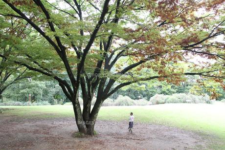 仙台野草園の写真素材 [FYI01231307]