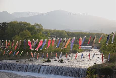 遠刈田温泉の鯉のぼりの写真素材 [FYI01231316]