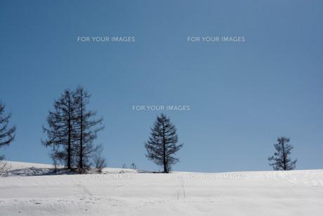 春の雪の丘と青空 美瑛町の写真素材 [FYI01231578]