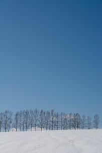 春の雪の丘と青空 美瑛町の写真素材 [FYI01231579]