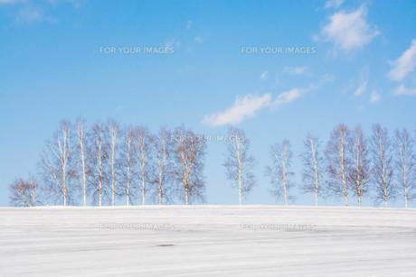 融雪剤が撒かれた雨雪の畑と冬木立 美瑛町の写真素材 [FYI01231584]