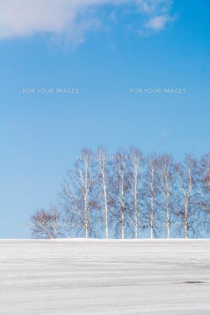 融雪剤が撒かれた雨雪の畑と冬木立 美瑛町の写真素材 [FYI01231585]