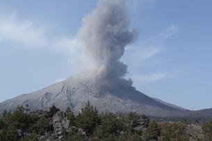 桜島の噴火の写真素材 [FYI01231878]