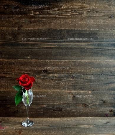 シャンパングラスにいけた一輪の赤い薔薇の写真素材 [FYI01232024]