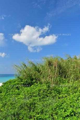 宮古島/前浜の写真素材 [FYI01232186]