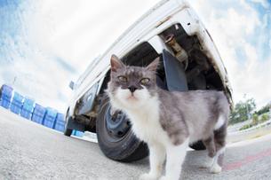 空と軽トラと野良猫の写真素材 [FYI01232201]