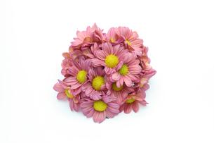 菊の花束の写真素材 [FYI01232344]