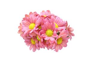菊の花束の写真素材 [FYI01232345]