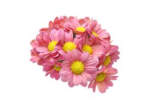 菊の花束の写真素材 [FYI01232346]