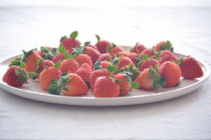 苺の写真素材 [FYI01232493]