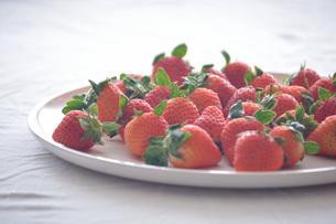苺の写真素材 [FYI01232494]