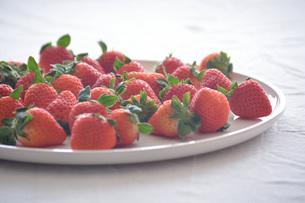 苺の写真素材 [FYI01232495]