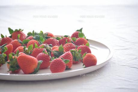 苺の写真素材 [FYI01232497]