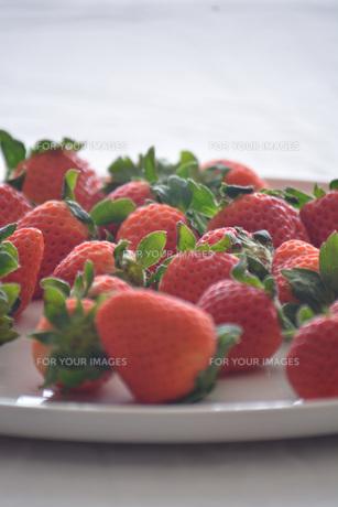 苺の写真素材 [FYI01232500]
