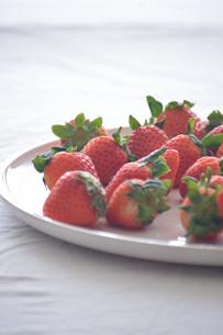 苺の写真素材 [FYI01232501]
