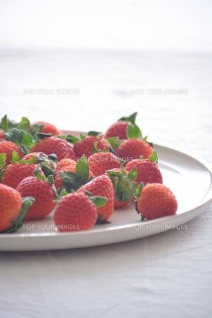 苺の写真素材 [FYI01232502]