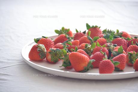 苺の写真素材 [FYI01232504]