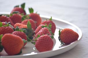 苺の写真素材 [FYI01232507]