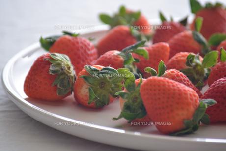 苺の写真素材 [FYI01232509]