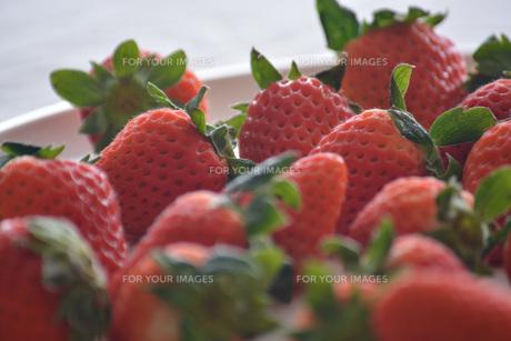 苺の写真素材 [FYI01232510]