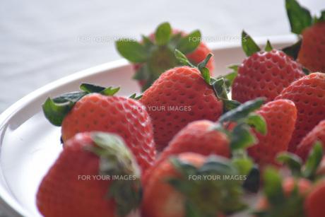 苺の写真素材 [FYI01232511]