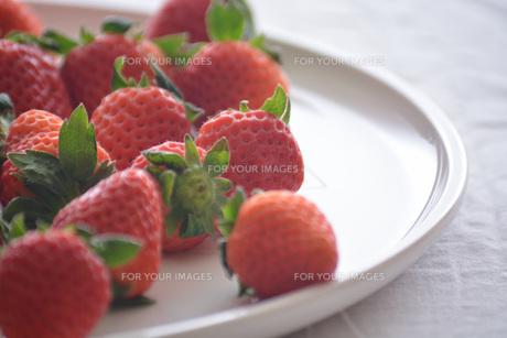 苺の写真素材 [FYI01232512]