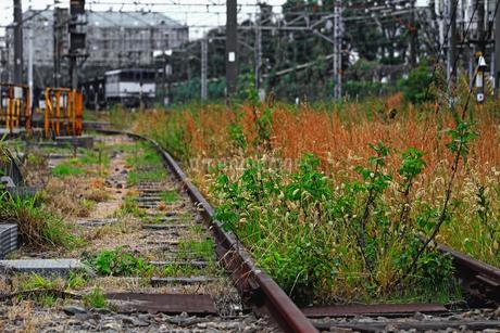 草の茂る貨物ターミナルの廃線の写真素材 [FYI01232885]