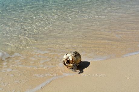 宮古島/冬のビーチの波打ち際の写真素材 [FYI01232975]