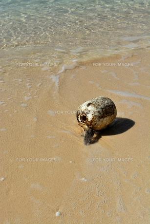 宮古島/冬のビーチの波打ち際の写真素材 [FYI01232978]